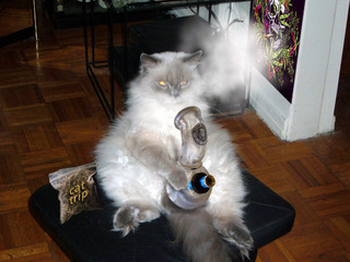 US man stuffs cat in marijuana pipe
